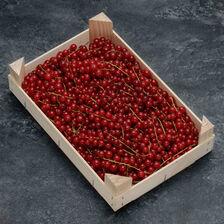 Groseille rouge confiture, Pays-Bas, plateau 1kg