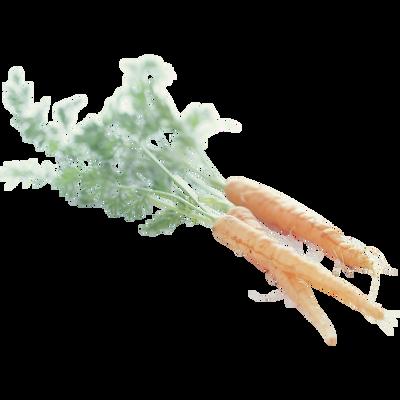 Mini carotte, Afrique du Sud, barquette 200g