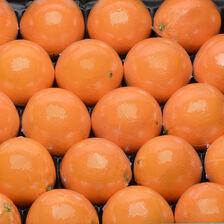 Orange Naveline, calibre 5, catégorie 1, non traitée après récolte, Espagne, filmée à la pièce