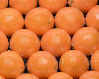 Orange navel, calibre 3, catégorie 1, non traitée après récolte, Afrique du Sud, filmée à la pièce