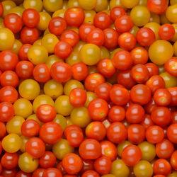 Duo de tomate cerise(jaune/rouge)barquette 250g Extra France