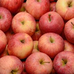 Pomme Royal Gala, LA POMMERAIE NANTAISE, calibre 136/165, catégorie 1, Treillières, le kilo