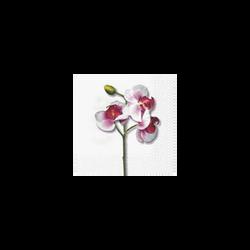 Serviettes en papier Orchidée Blanche 3 plis, 33x33cm, 20 unités