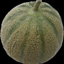 Melon charentais vert, BIO, calibre 950/1100g, Espagne, la pièce