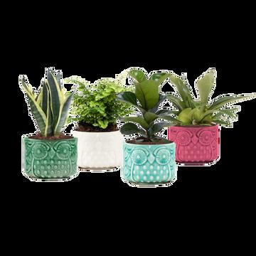 as Mixte Plantes Vertes Pot 12cm Céram.hibou H.25/30cm Pays Bas