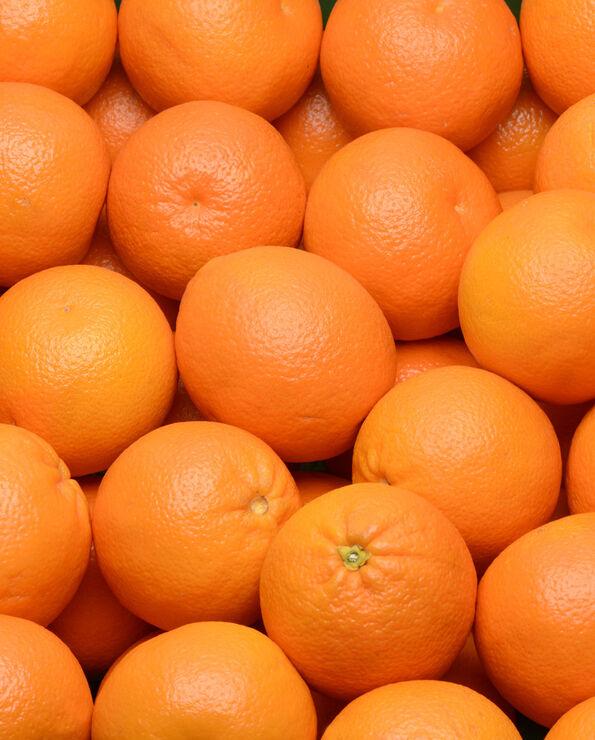 Orange valencia late, ROSITA, calibre 4, catégorie 1, Espagne