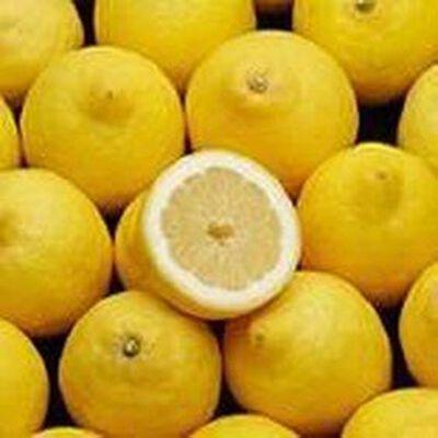 Citron Jaune  origine espagne categorie 1 variete primo