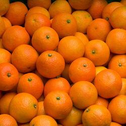 Mandarine nova  ,cal 1, cat 1, Afrique du Sud kg
