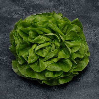 Salade Laitue, la pièce ORIGINE FRANCE