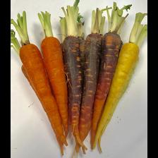 Mini-carotte, Afrique du sud, barquette, 400g