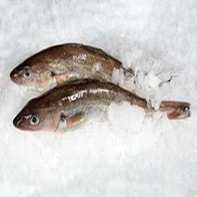 Merlan, Pêché en Atlantique Nord-Est, Merlangius merlangus