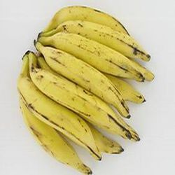 Banane jaune (plantin)