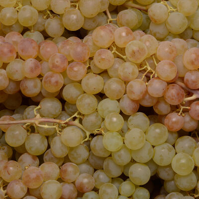 Raisin blanc Thompson Seedless, catégorie 1, Inde