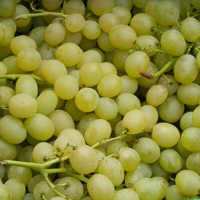 Raisin blanc Italia, Top Qualité, catégorie 1, Italie