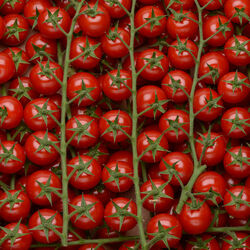 Tomate cerise ronde grappe, Les cerises rondes grappes, exquise, SAVEURS DU BOUT DU MONDE,cat.Extra, France