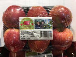 POMMES GALA BQ 6 FRUITS