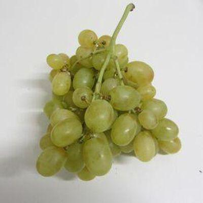 Raisin blanc Italia - Italie - cat 1 -