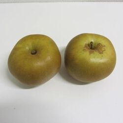 Pomme Canada Grise BIO - France - Cat 2 - Cal 136/165g-