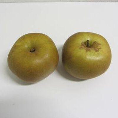 Pomme Canada Grise BIO - Cat 2 - Cal 136/165g- France