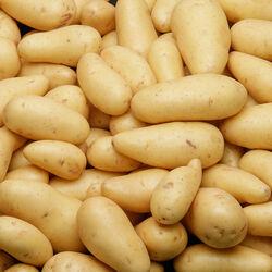 Pomme de terre nouvelle récolte Agata, De consommation, calibre 50/75,catégorie 1, France