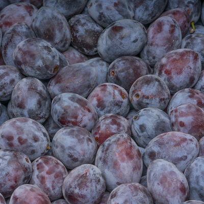 Prune rouge, calibre AA, Espagne