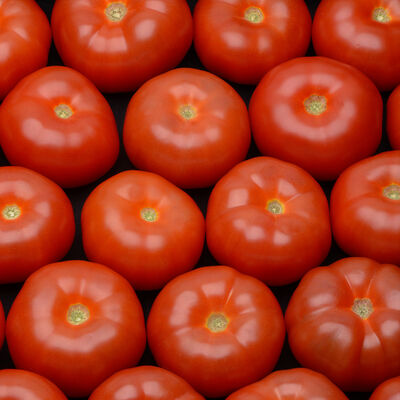 Tomate ronde, à farcir, segment Les charnues, calibre 82/102, catégorie 1, Belgique