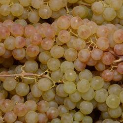 Raisin blanc Timpson seedless, catégorie 1, Pérou