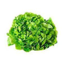 Salade Batavia (pièce)