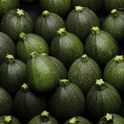 Courgette ronde, Italie