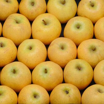 Pomme belchard, Calibre 170-200g, Catégorie Extra, France, la pièce