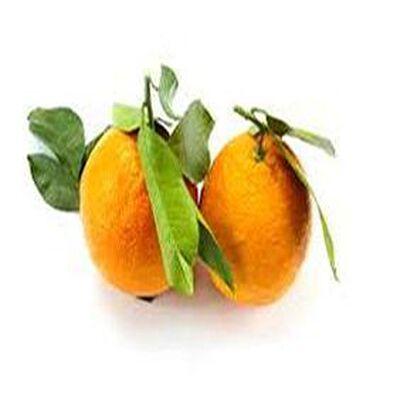 Orange non traité  cat1  calibre4   origine: Espagne