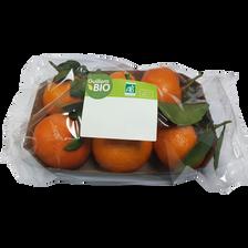 Mandarine murcott à feuille, BIO, calibre 4/5, catégorie 2, Espagne, barquette 500g